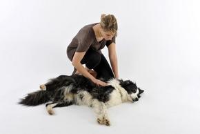 Femme faisant les gestes de premier secours sur un chien