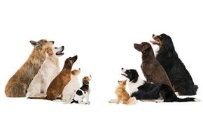 Le différents chiens de travail et comment les dresser