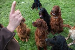 Groupe de chiens qui attendent l ordre