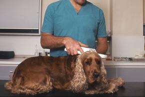 Identification d un chien