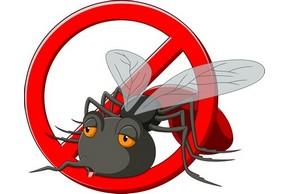 Interdiction aux moustiques 1
