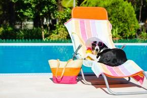 Les accessoires et preventions pour proteger son chien en ete