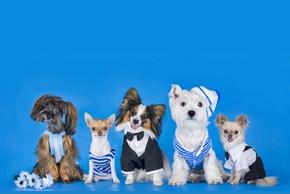 Les vetements pour chien
