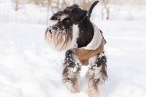 Manteau neige