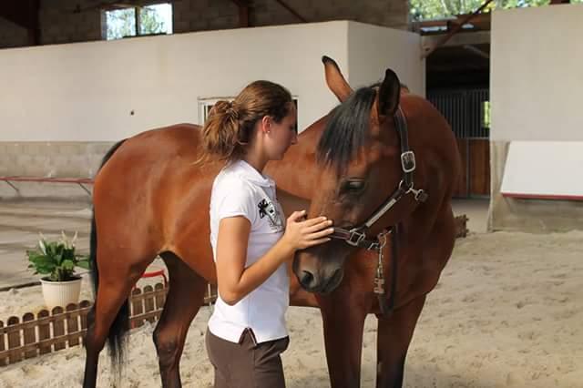 Massage d un cheval