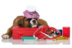 Medicament chien