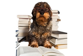 Meilleurs livres dressage chien