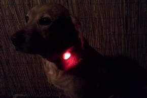 Mouss le chien avec son pendentif woufki led