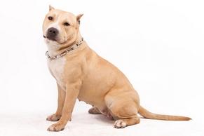 Mutuelles chien categories