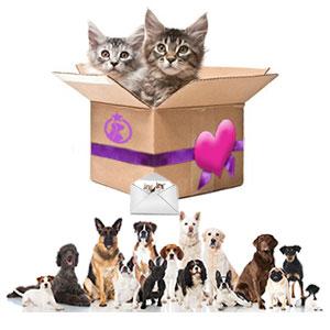 Notre selection pour accessoires chiens et chats