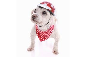 Panier velo chien