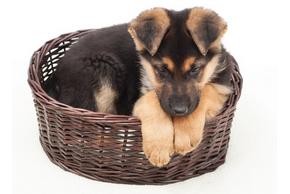 Paniers osier chien