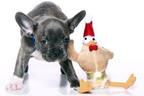 Peluches pour chien