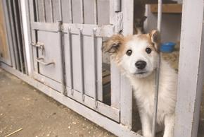 Petit chien a la spa
