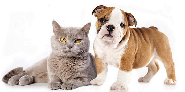 Photo chien et chat site