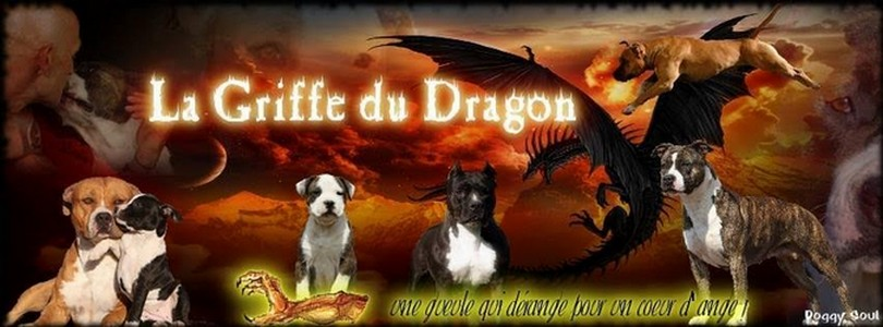 Photo elevage de la griffe du dragon
