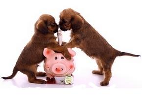 Prix mutelles chien