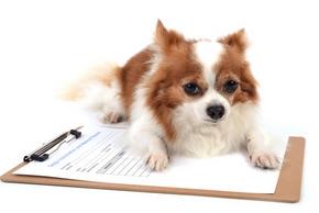 Risques pas faire vaccins chien