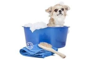 Le shampoing d'un chien