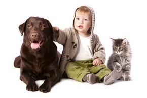 Socialisation chien