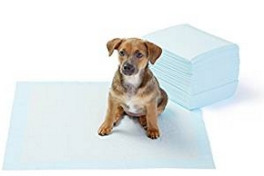 Tapis education proprete chien