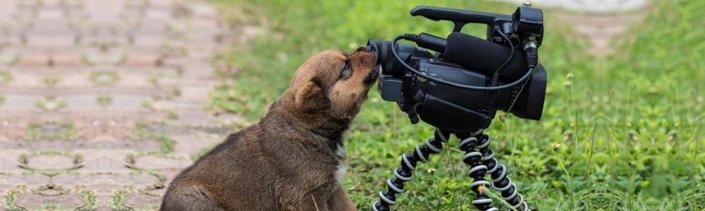 Videos sur les chiens