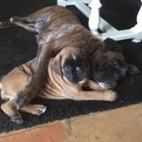 2 Boxers qui se font un câlin