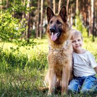 Berger allemand avec un enfant en foret