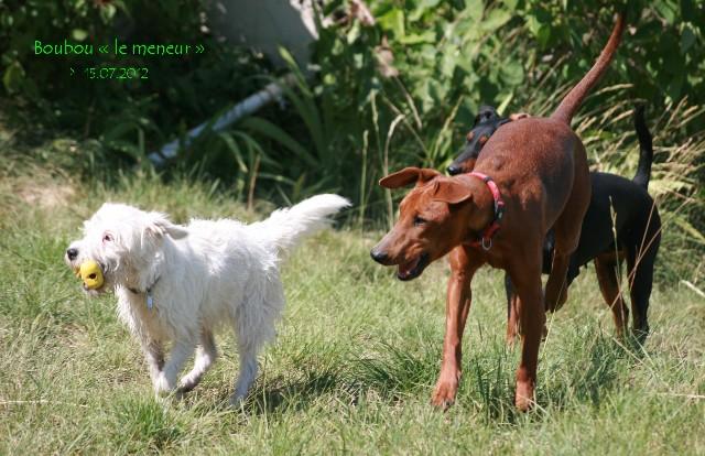 Boubou, un petit Parson Russell Terrier avec ses copains