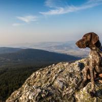 Braque français assis en haut d'une montagne