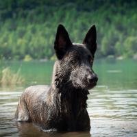 Bucky qui se baigne