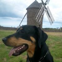 Buzz, le chien Beauceron croisé de Léo