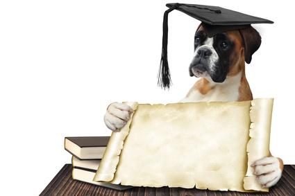Chien Boxer avec son diplôme