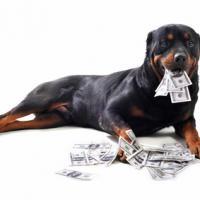 Chien Rottweiler avec des billets