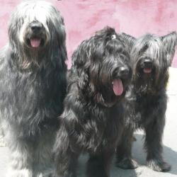 Cochise le papa, Tess la maman et Chouchou la petite !
