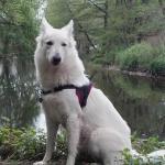 Dixie assis au bord d'une rivière