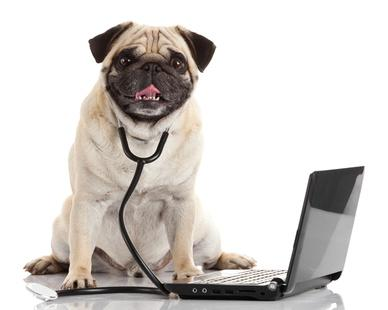 Carlin docteur avec son ordinateur