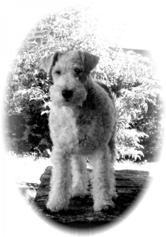 Foxtrot'h, la petite chienne de Fabienne