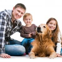 Golden retriever et sa famille