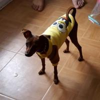 Guizmo avec son petit pull jaune
