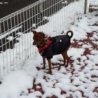 Guizmo dans la neige