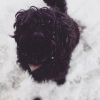 Gypdag, la chienne de Jolyane