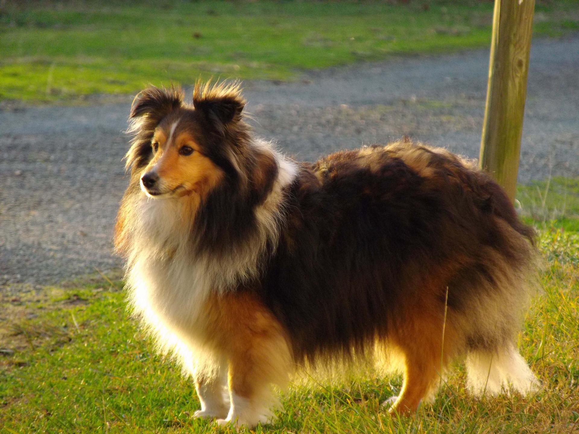 Hawai 6 ans, le chien de Béatrice