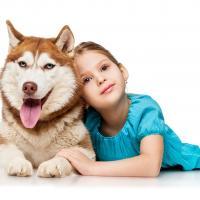 Husky siberien avec une petite fille