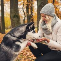 Husky siberien dans la foret avec sa maîtresse
