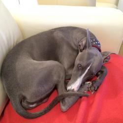 Joggy 9 mois, couché sur le canapé