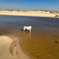 Labrador de 6 ans