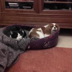 Laika et son copain le chat Socrate