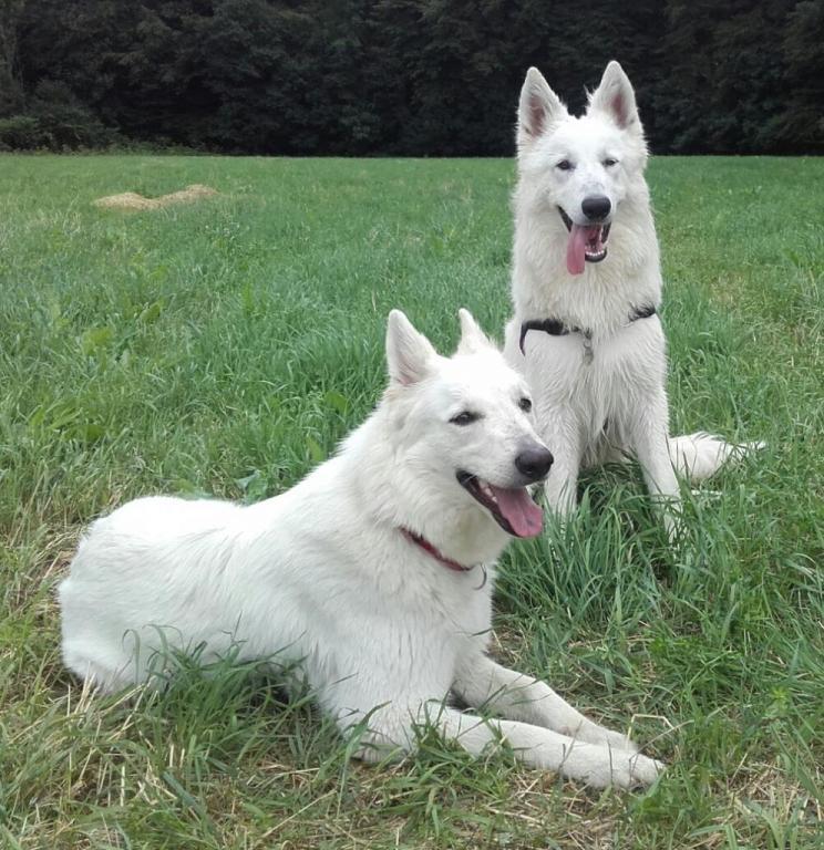 Laiko et Dixie