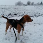 Le Beagle de Marine à la neige